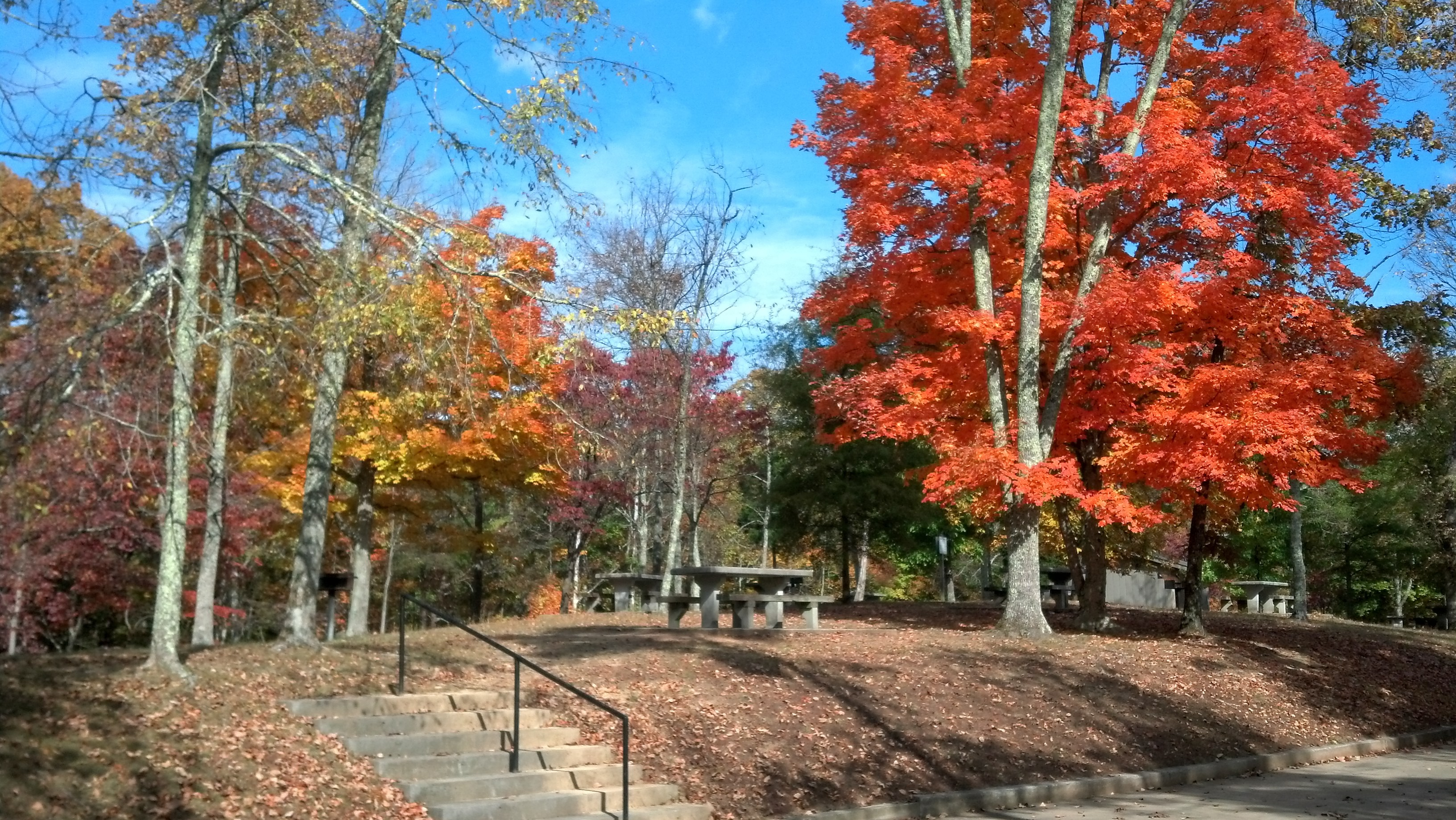 Fall colors at Panther Creek state park.